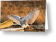 Snowy Owl - Bubo Scandiacus Greeting Card by Michael Russell