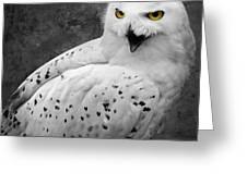 Snowy Owl Calling Greeting Card by Ed Pettitt