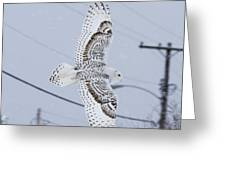 Snowy Owl Glides Into Town Greeting Card