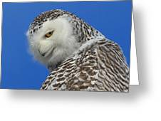 Snowy Owl Greeting Card Greeting Card by Everet Regal