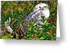 Snowy Owl In Salmonier Nature Park-nl Greeting Card