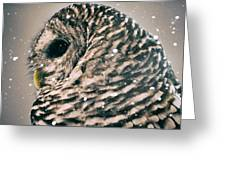 Snowy Owl In Snow Storm -- Blizzard Greeting Card
