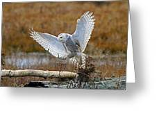 Snowy Owl Landing Greeting Card