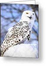 Snowy Owl Look Out Greeting Card