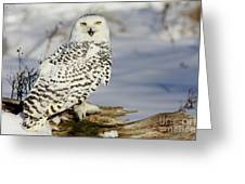 Snowy Owl On A Winter Hunt Greeting Card by Inspired Nature Photography Fine Art Photography