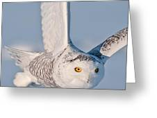 Snowy Owl Pictures 47 Greeting Card