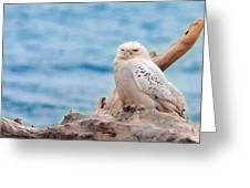 Snowy Owl Resting On Log Greeting Card
