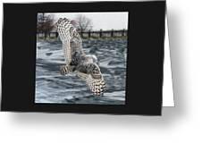 Snowy Owl Wingspan Greeting Card