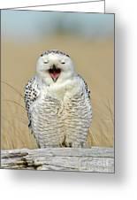 Snowy Owl Yawning Greeting Card