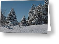 Snowy Pines Greeting Card by Jeff Swanson