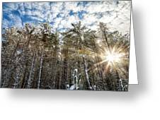 Snowy Pines With Sunflair Greeting Card