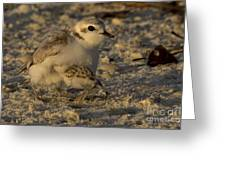Snowy Plover Transformation Into A Spiderbird 1 Greeting Card