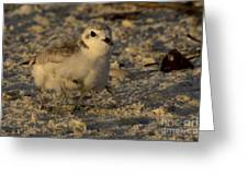 Snowy Plover Transforms Into A Spiderbird 2 Greeting Card