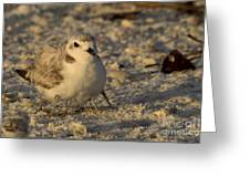 Snowy Plover Transforms Into A Spiderbird 3 Greeting Card