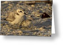Snowy Plover Transforms Into A Spiderbird 4 Greeting Card