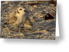 Snowy Plover Transforms Into A Spiderbird 5 Greeting Card