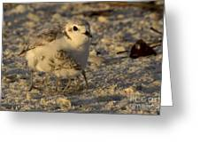 Snowy Plover Transforms Into A Spiderbird 6 Greeting Card