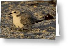 Snowy Plover Transforms Into A Spiderbird 8 Greeting Card