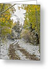 Snowy Road In Fall Greeting Card