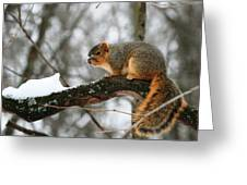 Snowy Snout Greeting Card