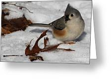 Snowy Titmouse Greeting Card