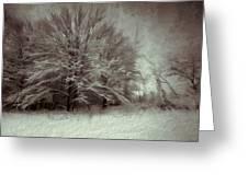 Snowy Treasure Greeting Card