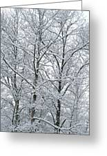 Snowy Tree Limb Maze II Greeting Card
