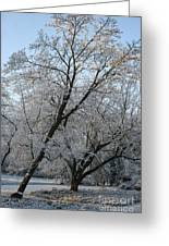 Snowcovered Trees Greeting Card