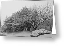 Snowy Trees In Black And White Greeting Card