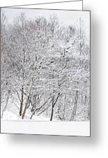 Snowy Trees In Winter Park Greeting Card