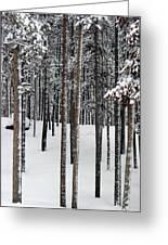 Snowy Walk In The Woods IIi Grand Lake Co Greeting Card