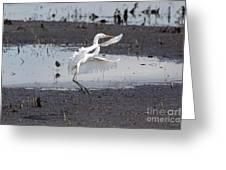 Snowy White Egret Greeting Card