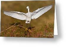 Snowy Wingspread Greeting Card by Bryan Keil