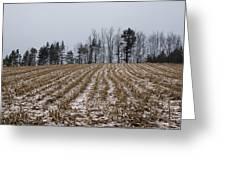 Snowy Winter Cornfields Greeting Card
