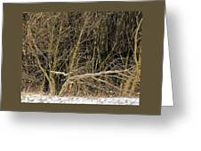 Snowy Winter Forest Greeting Card