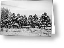 Snowy Winter Pine Trees In Black And White Greeting Card