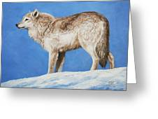 Snowy Wolf Greeting Card by Crista Forest