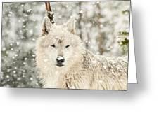 Snowy Wolf Greeting Card