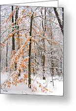 Snowy Woods Greeting Card