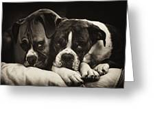 Snuggle Bug Boxer Dogs Greeting Card by Stephanie McDowell