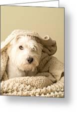 Snuggle Dog Greeting Card