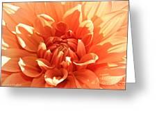 Soaking Up Sunshine Greeting Card