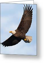 Soaring American Bald Eagle Greeting Card
