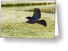 Soaring Boat-tailed Grackle - Glow Greeting Card