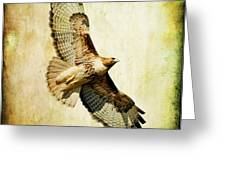 Soaring Hawk Greeting Card