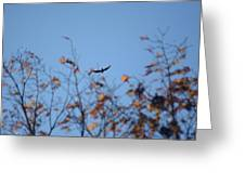 Soaring In Autumn  Greeting Card