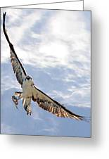 Soaring Greeting Card by Julie Cameron