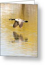 Soaring Over The River Greeting Card