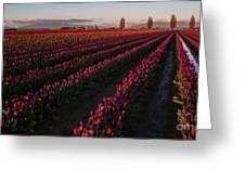 Soaring Spring Colors In Skagit Greeting Card