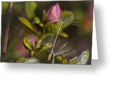 Soft And Delicate Greeting Card